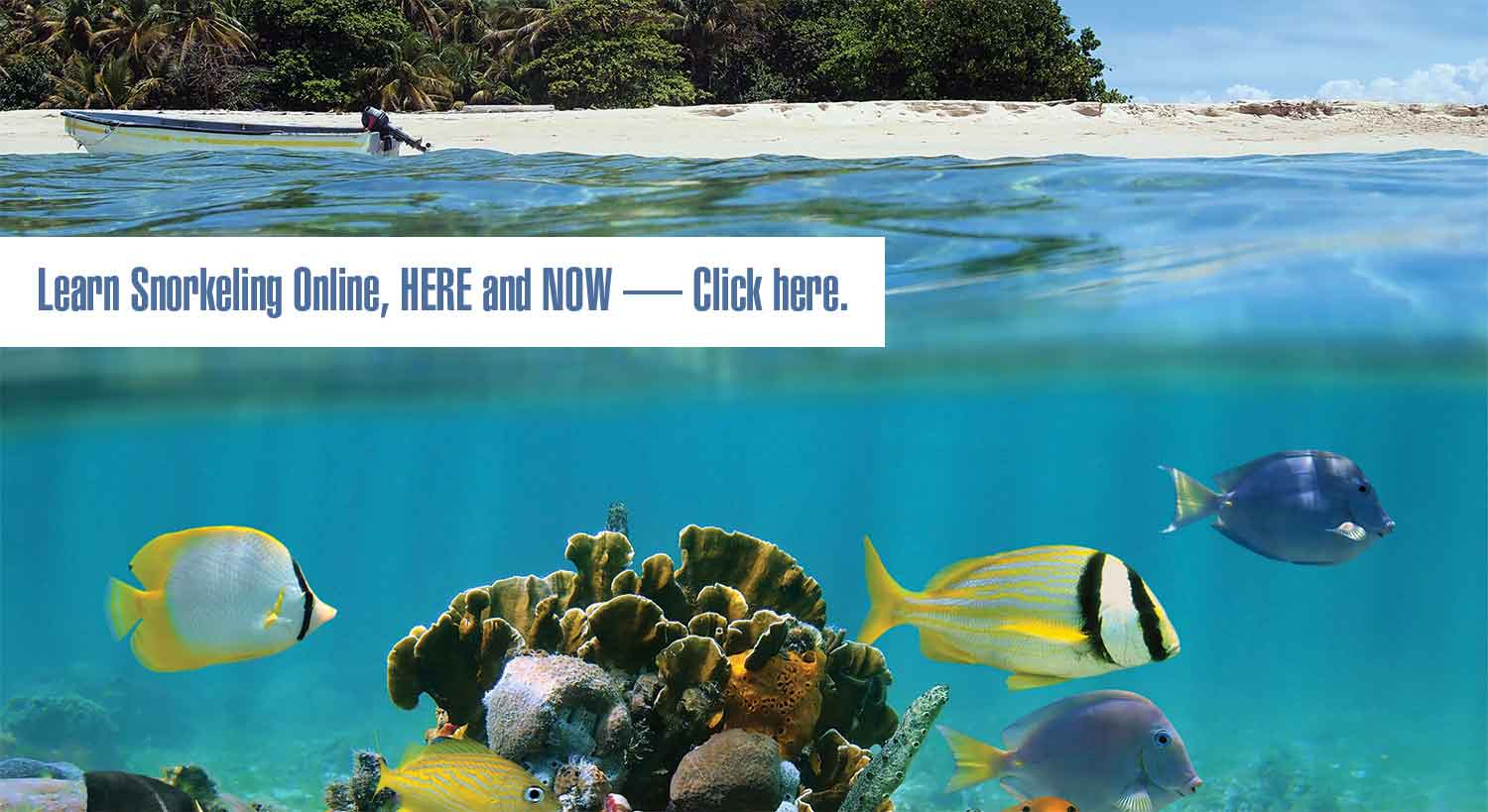 Learn Snorkeling Online Here and Now